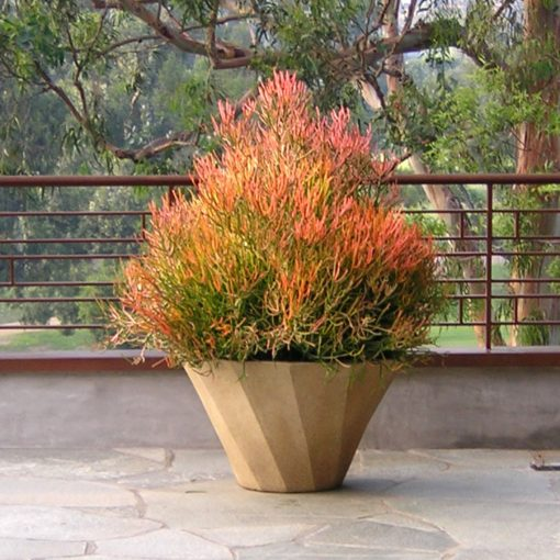Inner Gardens Spiral terra cotta plantr containing beautiful red shrub