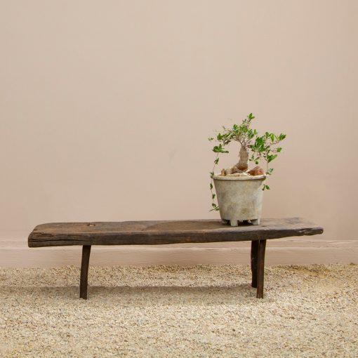 Inner Gardens terra cotta orchid pot on backless reclaimed wood bench